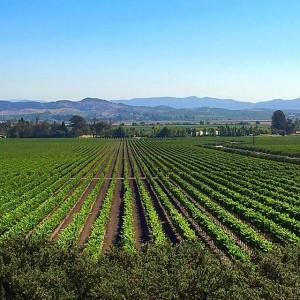 #Art in the #vineyards - #love #wine and #painting! #happiness #artwork #arte #artsy #artistic #vino #vines #grapes #vine #champagne #artoftheday #fun #nature #ohyeah #artist #GloriaFerrer #sonoma