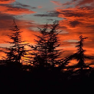 Amazing #red #sunset in the #sky last night! ~#trees #beauty #colors #photogrid #photo #ohyeah #California #nature