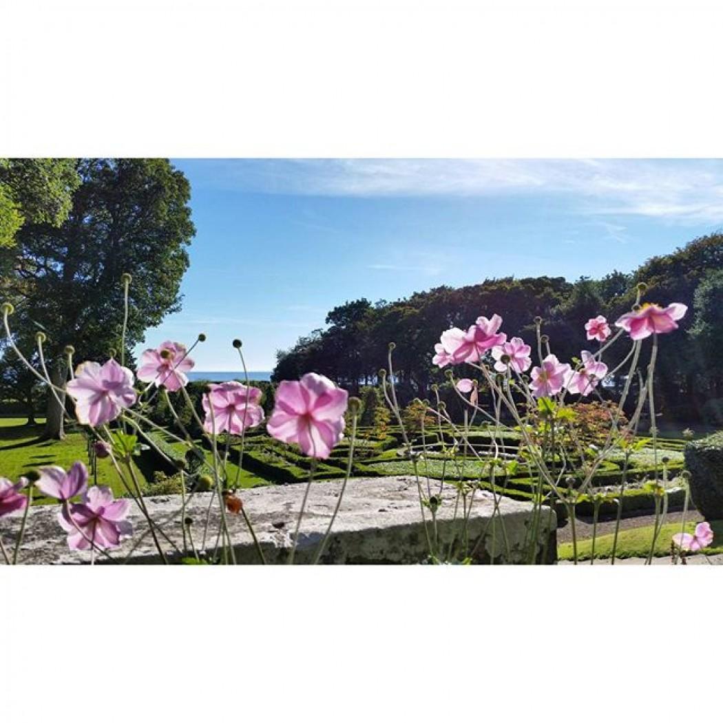The Flowers of Dunrobin Castle