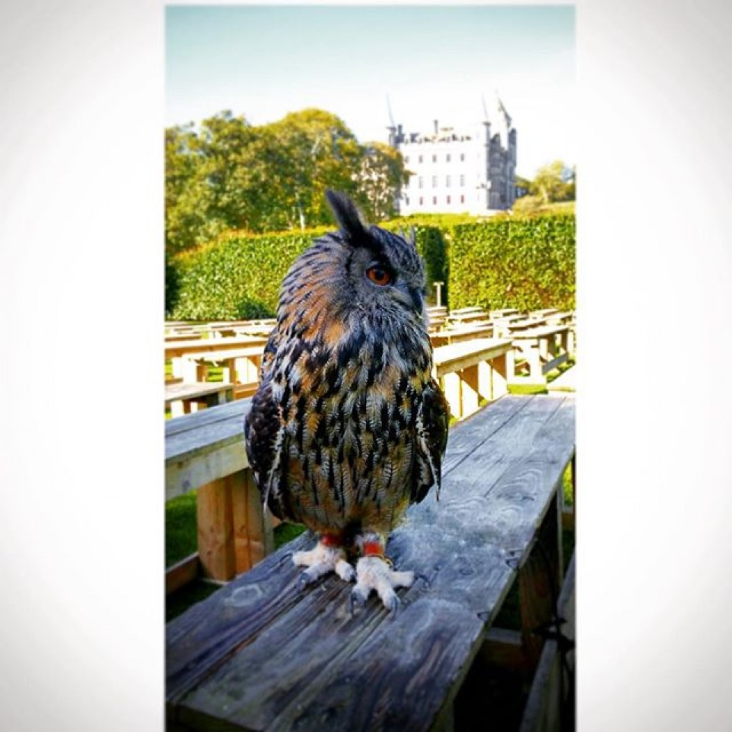 Learn more about Falconry at Dunrobin Castle...